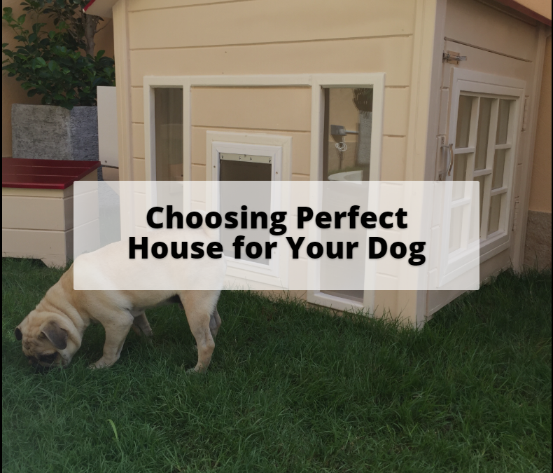 Choosing the Perfect House for your Dog?