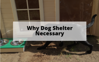 Is dog shelter necessary?