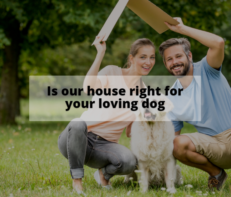 Is our house right for your beloved dog?